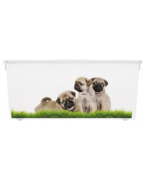 Plastový box KIS Puppy and Kitten - L
